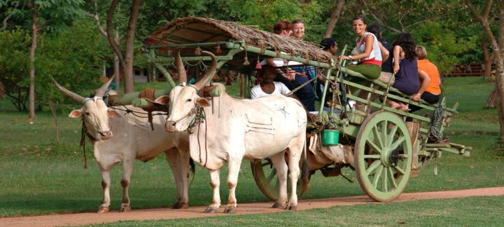Backpack tour in Sri Lanka. Great time to visit this beautiful island   Tropical Way Tours