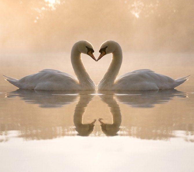 20 Magnifiques photos d'animaux qui s'embrassent, le temps des amours