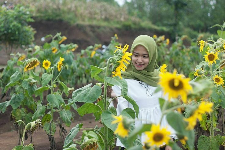 From @tersadow . Selamat pagi Jadilah seperti bunga matahari yang selalu setia dengan keberadaan matahari kemanapun arahnya  . Taken at Peternakan Kuda Megastar Indonesia Batu