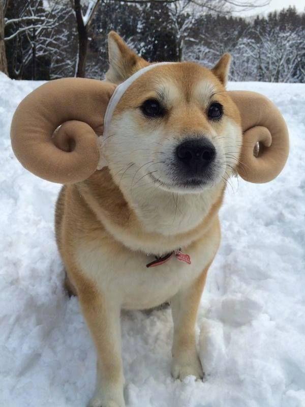 Doge ram