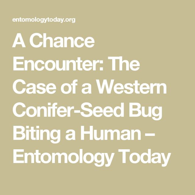 A Chance Encounter: The Case of a Western Conifer-Seed Bug Biting a Human – Entomology Today