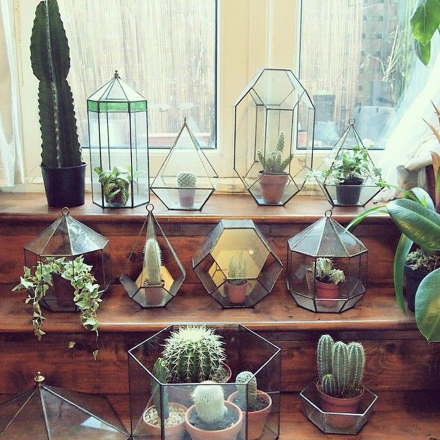 small cacti terrariums / Magic Garden <3