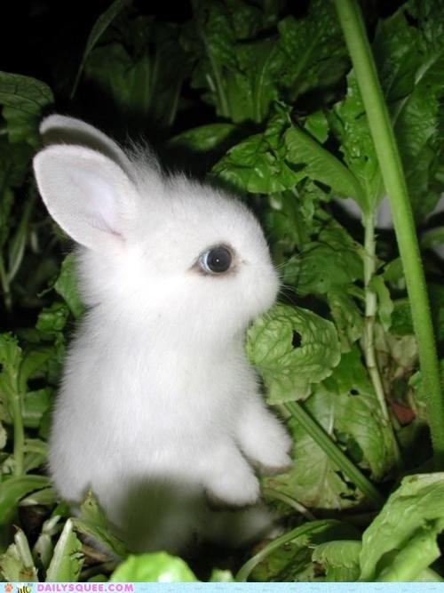 Baby bunny in the gardenAnimal Pictures, Animal Baby, White Bunnies, Easter Bunnies, Baby Bunnies, Baby Animal, Big Eye, White Rabbit, Cutest Animal