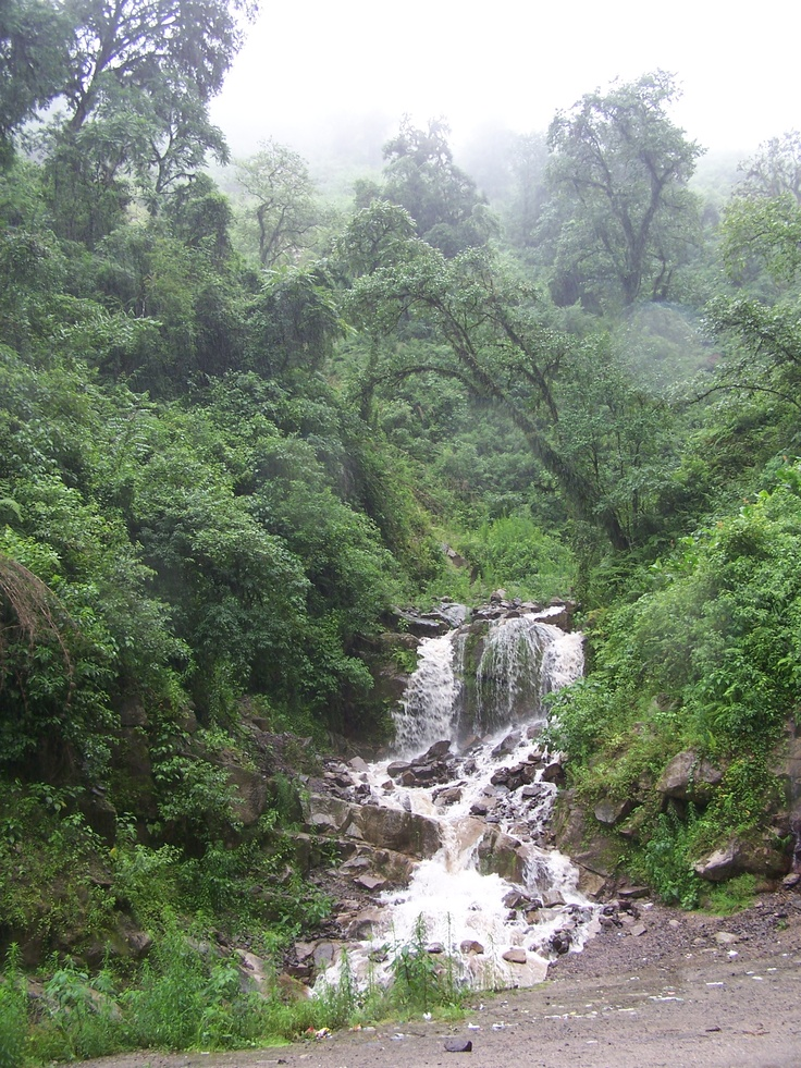 The tucuman forest.