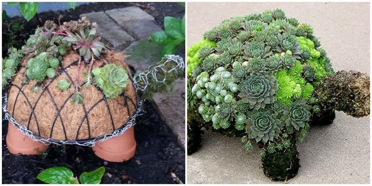 This Succulent Turtle Planter Is Basically a Chic Version of the Chia Pet