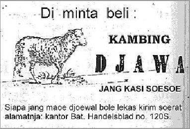 Indonesian Old Commercials:Java Goat & Lamp Head
