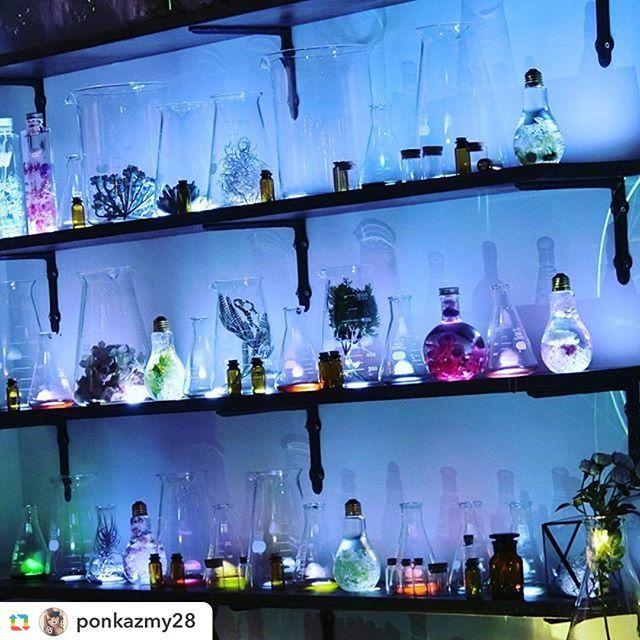 "【flowerium_products】さんのInstagramをピンしています。 《コレド室町1 5階三井ホールにて開催中のFLOWERS by NAKED . . . 1番最後に現れるFLOWERSの実験室""シークレットガーデン""内に たくさんのフラワリウムが* . . . ガラスの中に封じ込められた色とりどりの花と プロジェクションマッピングのコラボレーションをお楽しみください* . .  #GPRepost,#reposter,#notetag @ponkazmy28 via @GPRepostApp ====== @ponkazmy28:#flowersbynaked . . ○ フラワリウムHP ○ http://www.flowerium.jp *online shop 3月上旬open予定* . . . ○参加イベント -FLOWERS by NAKED - 日本で一番早いお花見を、 日本橋で。  2016年は、通算15万人の動員を達成し、Instagram…"