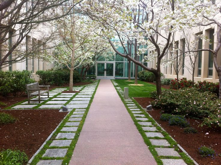 A group of white crab apple (Malus spp.) blooms in the courtyard.