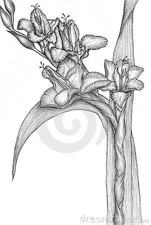disegnare fiori a matita - Cerca con Google