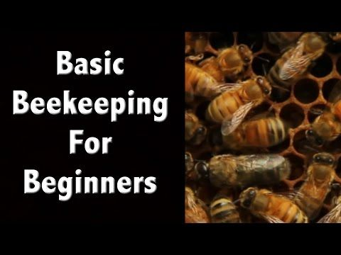 Beekeeping For Beginners and Beekeeping Basics - Off Grid Living - YouTube