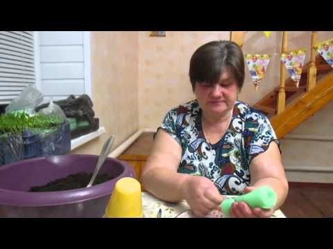 Как удачно посадить томаты. - YouTube