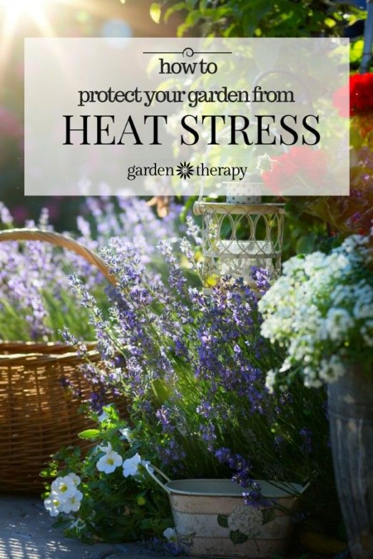 25 best ideas about heat stress on pinterest horse horse horse care and horse feed - Gardening in summer heat a small survival guide ...
