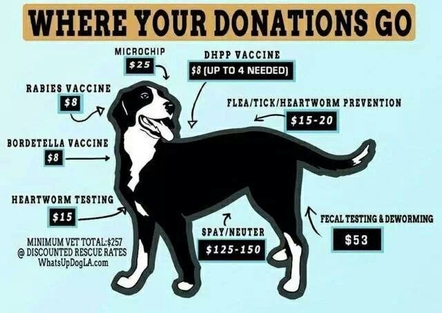 Animal Shelter Pillow Donation : 17 Best images about HUMANE SOCIETY on Pinterest Cats, Adoption and Lost