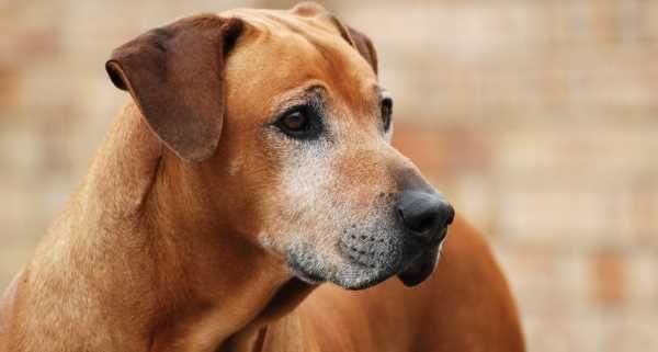 Veterinários apoiam uso de canabidiol em animais - greenMe.com.br