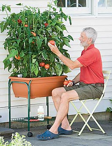 tomato success trolley. apparently this is a line of products including a kit and cage extension for support, which has always seemed necessary to me. Looks like it *may* fit two plants, maybe one big one. has great reviews. my mom might love this.