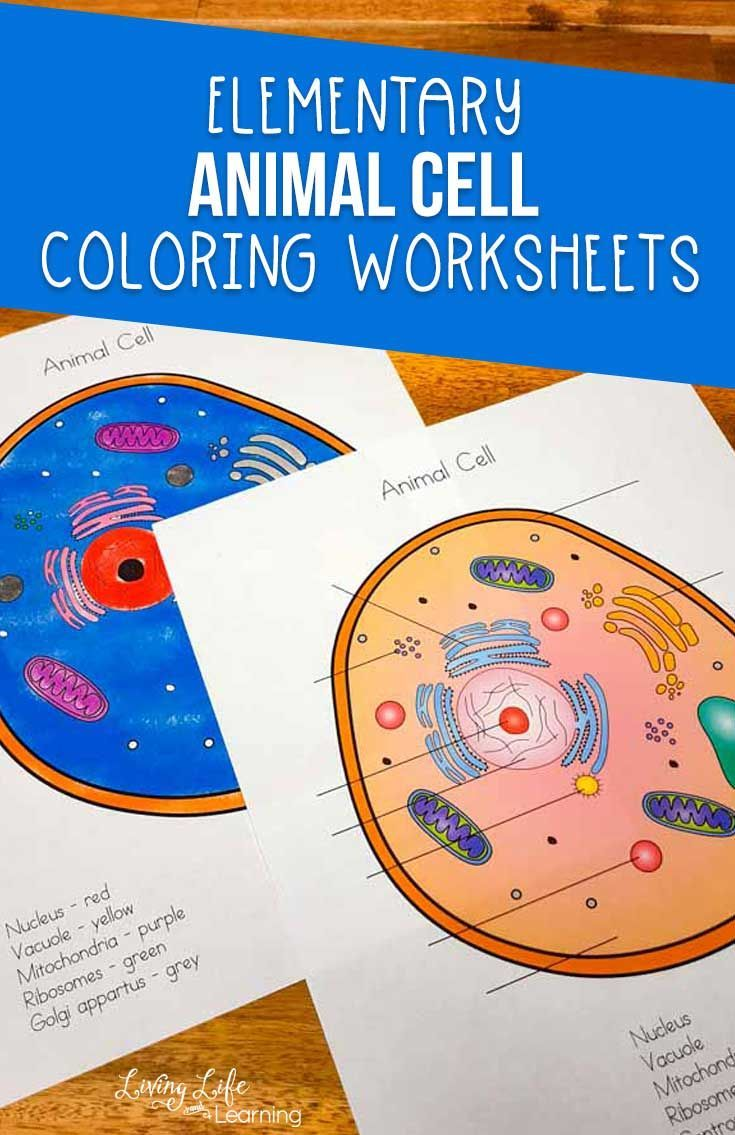 Animal Cell Coloring Worksheet Cells Worksheet Animal Cells Worksheet Color Worksheets