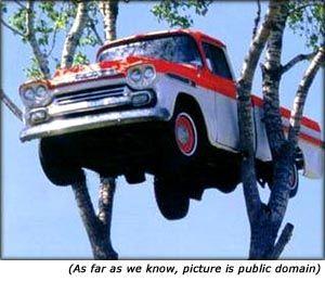Citações sobre o seguro de carro: Retrato engraçado de carro no alto de uma árvore.