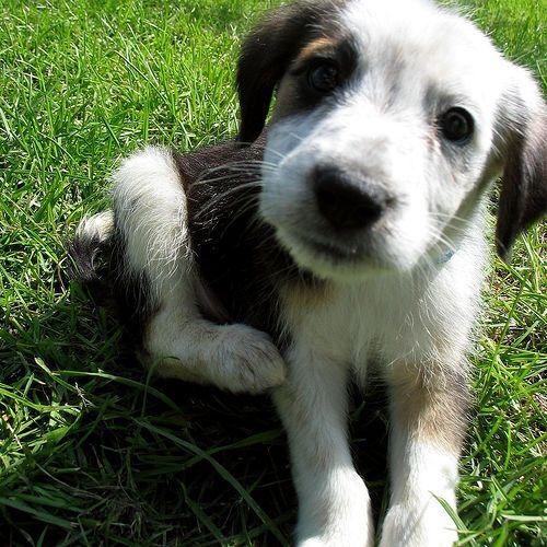 Sognare cani: affetto e fedeltà - significato del sogno