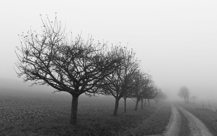Black And White Tree Pictures With Fog Images 6 HD Wallpapers
