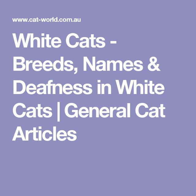 White Cats - Breeds, Names & Deafness in White Cats | General Cat Articles