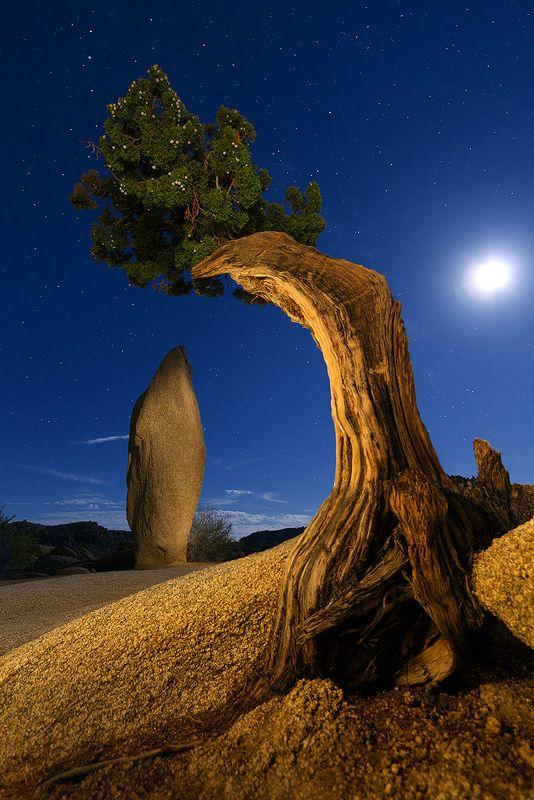 Heart Of Joshua Tree | Joshua Tree National Park | Photo By Benjamin Hill