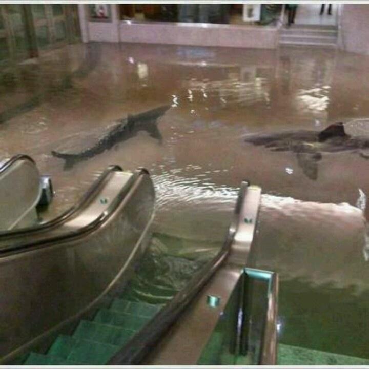 My future shark pool. Shark, Shark tank, Photo