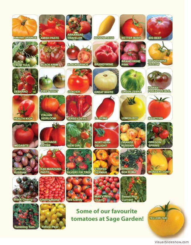 191 Best Images About Garden Seeds On Pinterest Purple 400 x 300