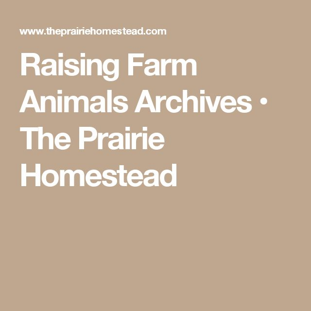 Raising Farm Animals Archives • The Prairie Homestead