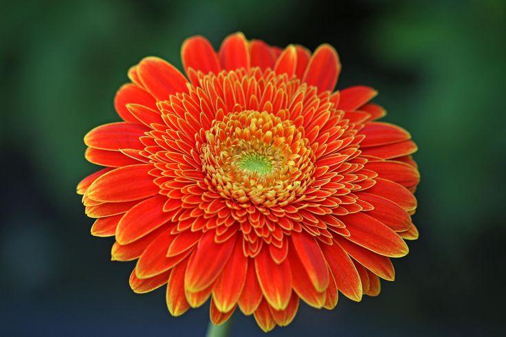 Orange - Orange beauty
