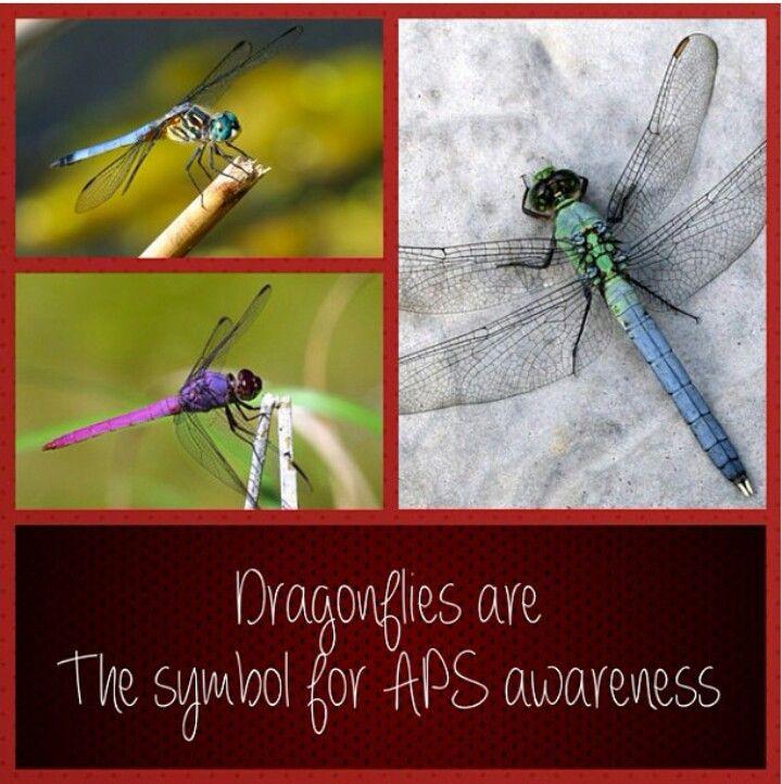 Antiphospholipid Syndrome  APS #Dragonflies