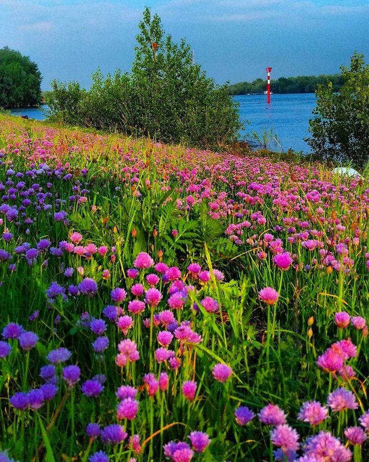 #gutenmorgen #Rhein #blueten #blossem  #Wesel #Niederrhein  #spring #fruehling #spring #naturephotography #NRW #naturelovers  #ig_nikon #nature_shooters #natureart #Nikon #Nikond750 #nikon750 #IG_captures #ig_nrw #ig_deutschland #ig_global by bstnrw
