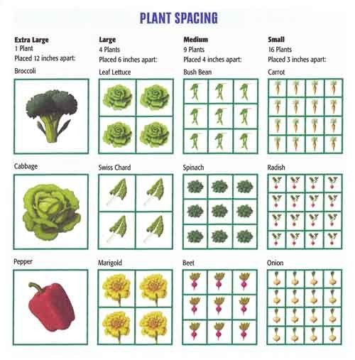 Tips for proper spacing green thumb square foot for Vegetable garden designs south africa