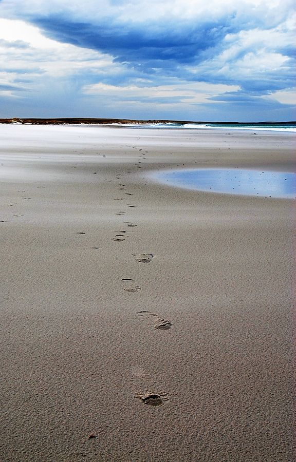 A Beach in Stanley, Falkland Islands- a Destination Offered by Southbound.
