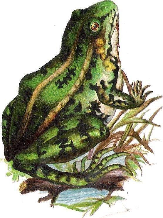 Oblaten Glanzbild scrap die cut chromo Frosch frog 9,5 cm Reptil