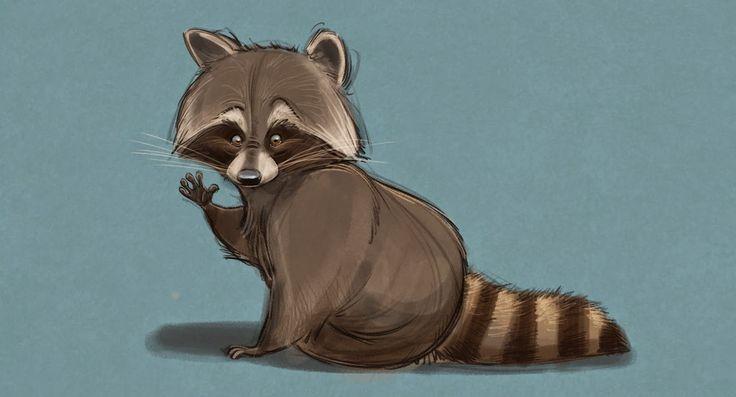 Some Random Raccoon Sketches Animals Raccoon Art