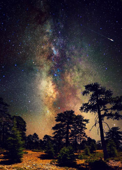 Amazing!: Forests, Shooting Stars, Galaxies, Starry Night, Starrynight, Milkyway, Deep Spaces, Night Sky, Milky Way
