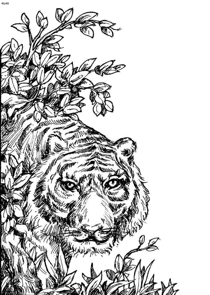 Image Detail For Coloring Book Tiger Page