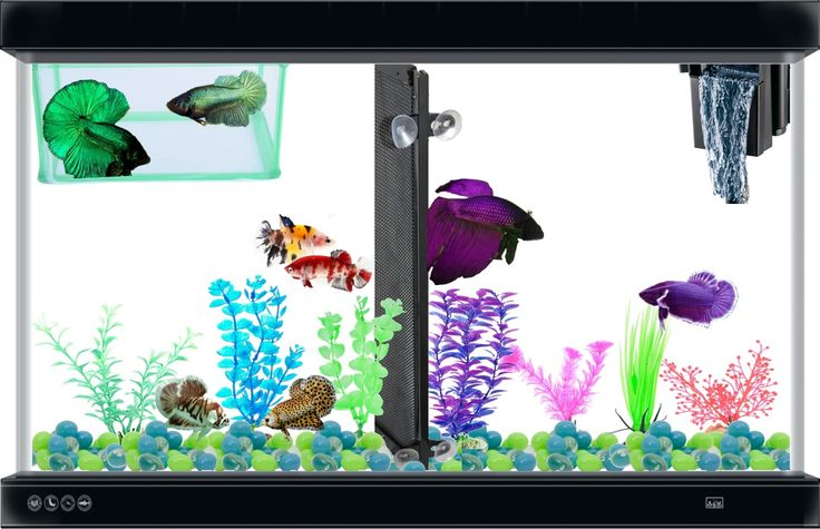 17 best images about betta fish guide crafts tanks on for Betta fish tanks at walmart