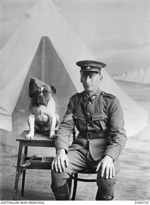 WWI; portrait probably of Staff Sergeant Major (SSM) Gabriel Albert Morgan, Instructional Staff, CMF, of Bendigo, Vic. SSM Morgan enlisted in the AIF on 3 Sept 1917, and was appointed Company Sergeant Major. He survived the war and  on 6 Nov 1918 he embarked aboard HT Marathon to return to Australia.