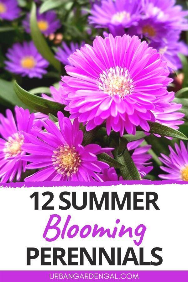 12 Summer Blooming Perennial Flowers In 2020 Flowers Perennials Perennials Garden Flowers Perennials