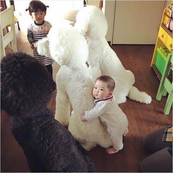 兄ワンコと女の子が囲碁勝負 このあとの展開に思わずほっこり いぬのきもちweb Magazine 犬 赤ちゃん いぬ ワンコ