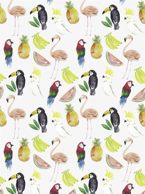 fruit + birds