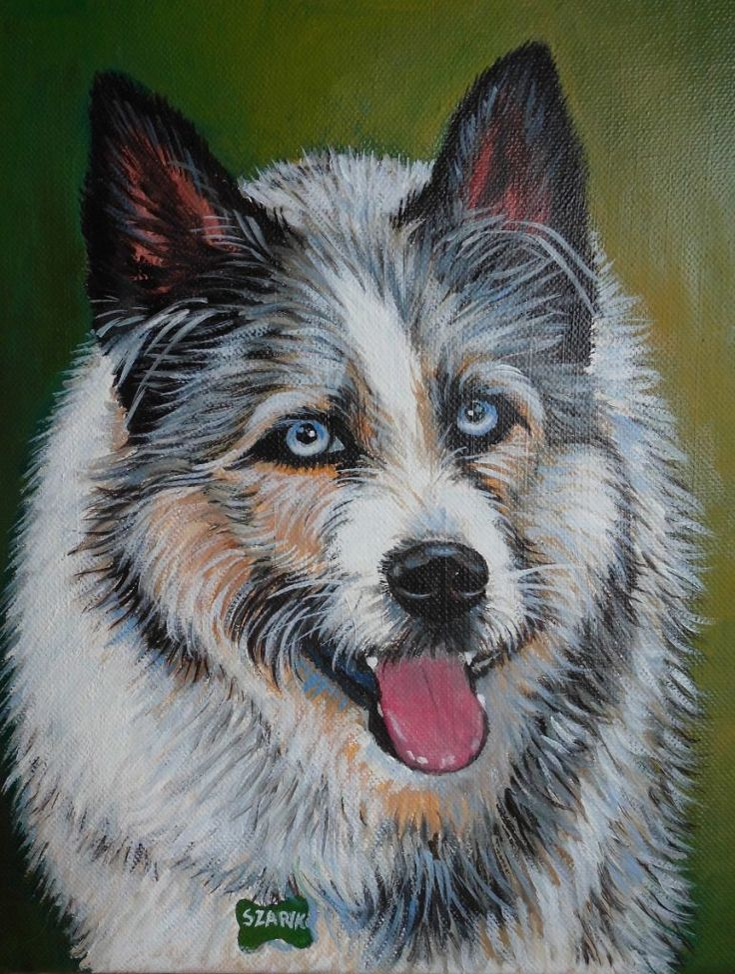 Portret psa Szarika z Fundacji Canis