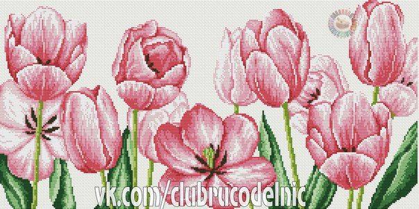 Fresh Tulips 1