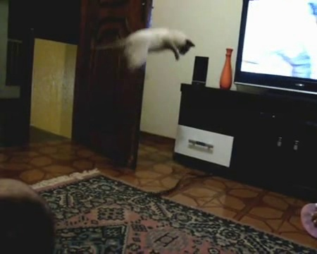 How To Scare A Cat: More Info at   http://people-with-pets-are-happier.com/pet-games-scare-cat