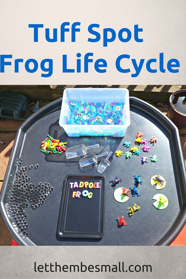 frog life cycle tuff spot. A great tuff spot activity for young toddlers or pre school children to learn about the four main stages of the frog lifecycle.