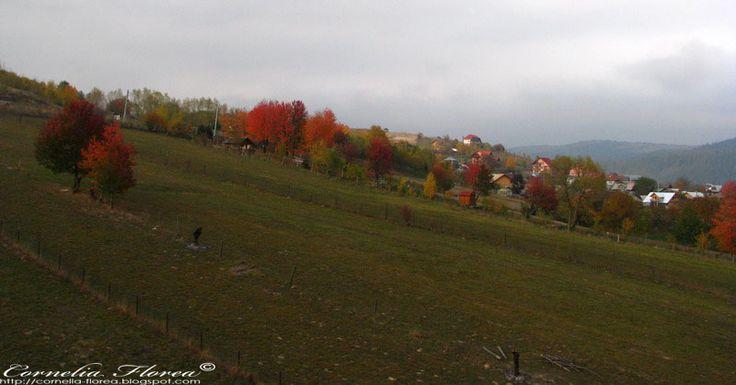 Călătorii, gânduri, vise: Romania