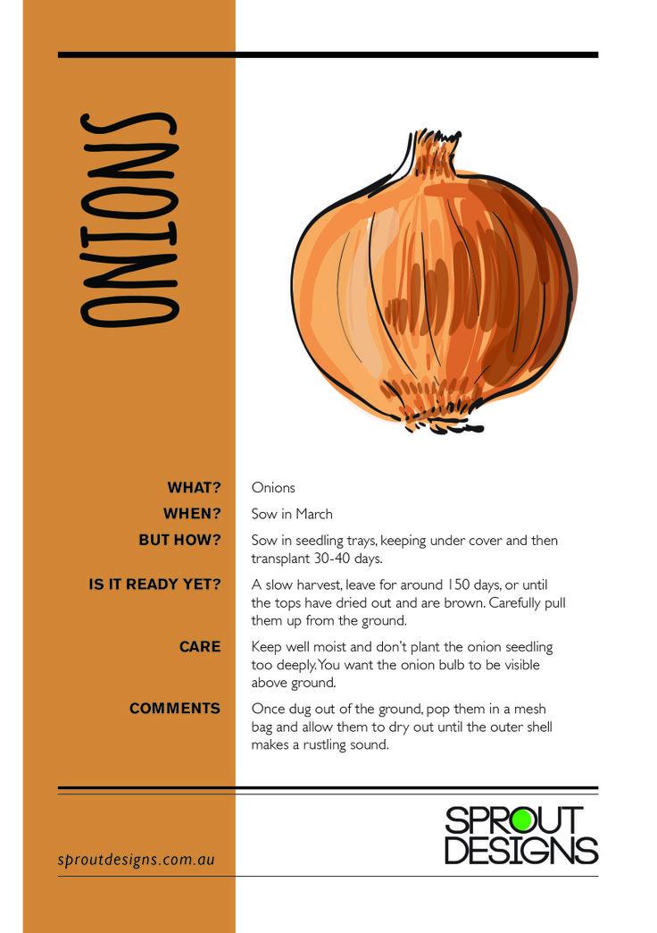 How to grow Onions!