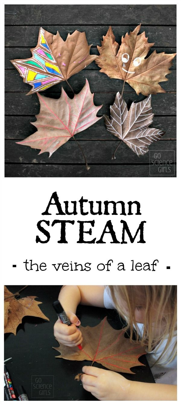 Autumn STEAM: tracing the veins of a leaf. Nature STEM + Art activity for kids with autumn (fall) leaves.