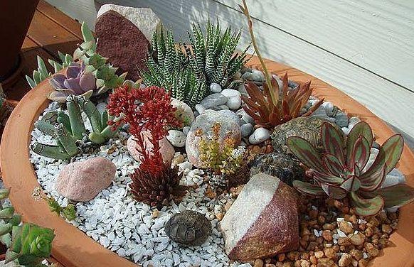 Garden Flowerpot succulents  #Garden#Flowerpot#Succulent Dekor